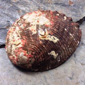 Smudging Shell - Abalone - Grade A