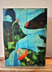 "Ten Oaks Design - 7.25"" x 10.25"" Wood Block Art - Blue Poppies"