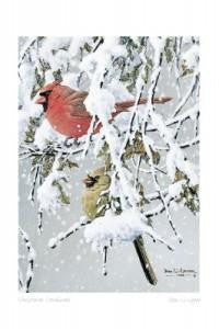 Canadian Art Prints Art Card Christmas Cardinals By Don Li- Leger