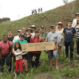 One Tree Planted : Support Global Reforestation : One Dollar, One Tree