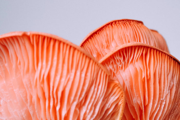 6 Mushrooms That Will Turbo-Charge Your Immune System