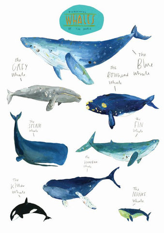 More about whales