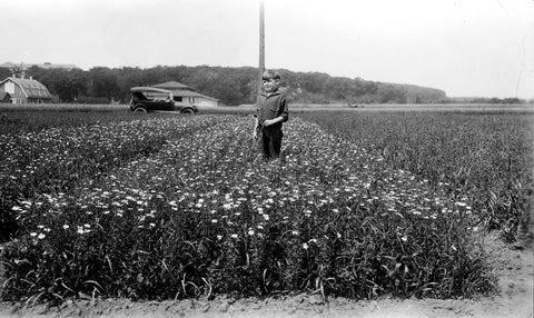 Young boy in the middle of grown flax field