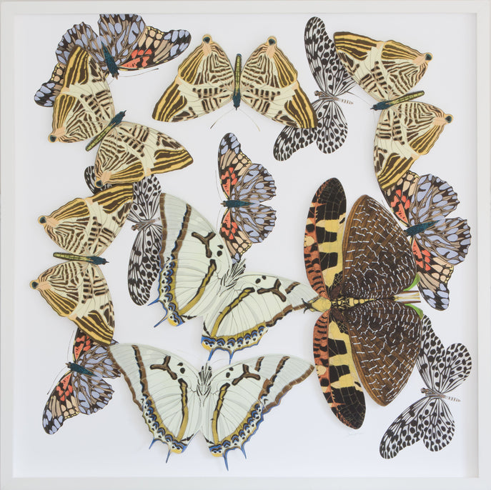Large  Butterfly and Moth Collage