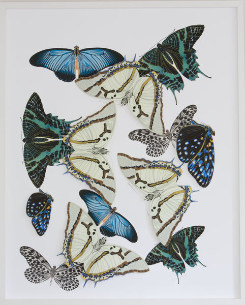 Large Butterfly and Moth Collage: Blue