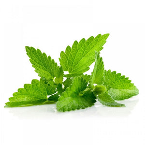 Spearmint DIY Flavoring