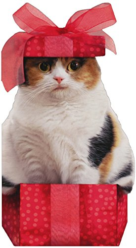 Cat in Small Christmas Box - Avanti Holiday Card