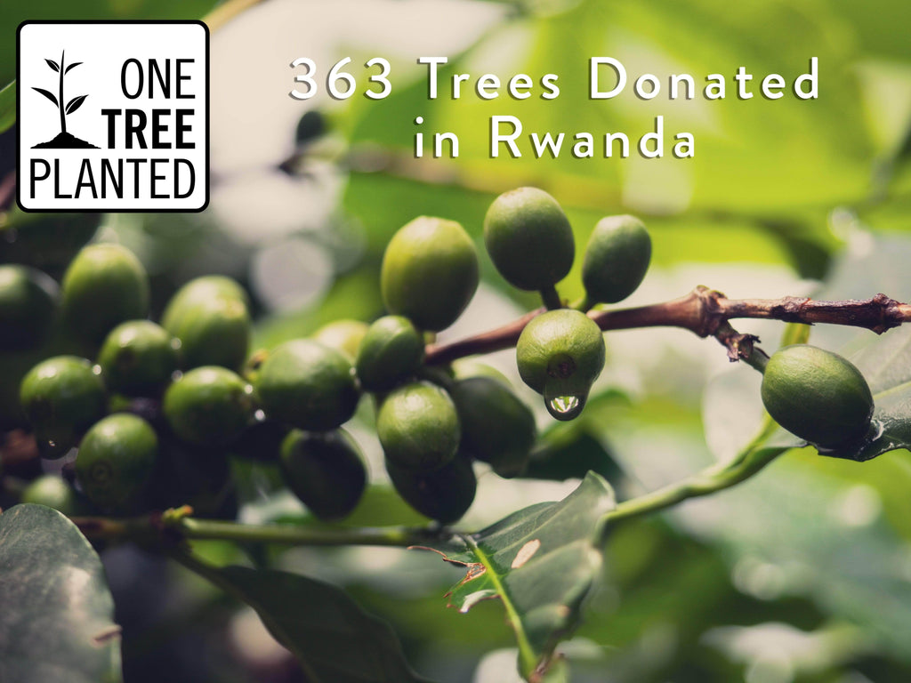 Rwandan Coffee and Tree Planting