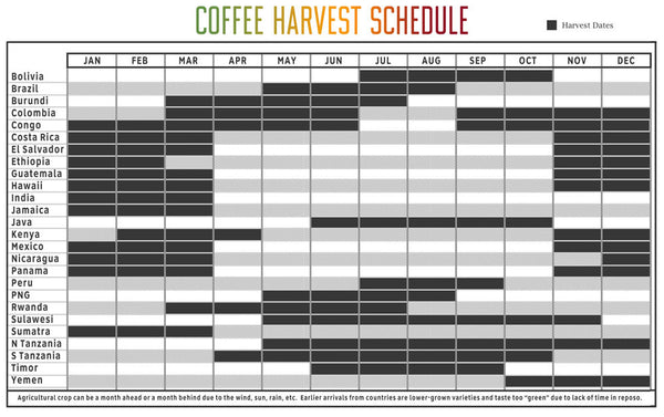Coffee harvest schedule