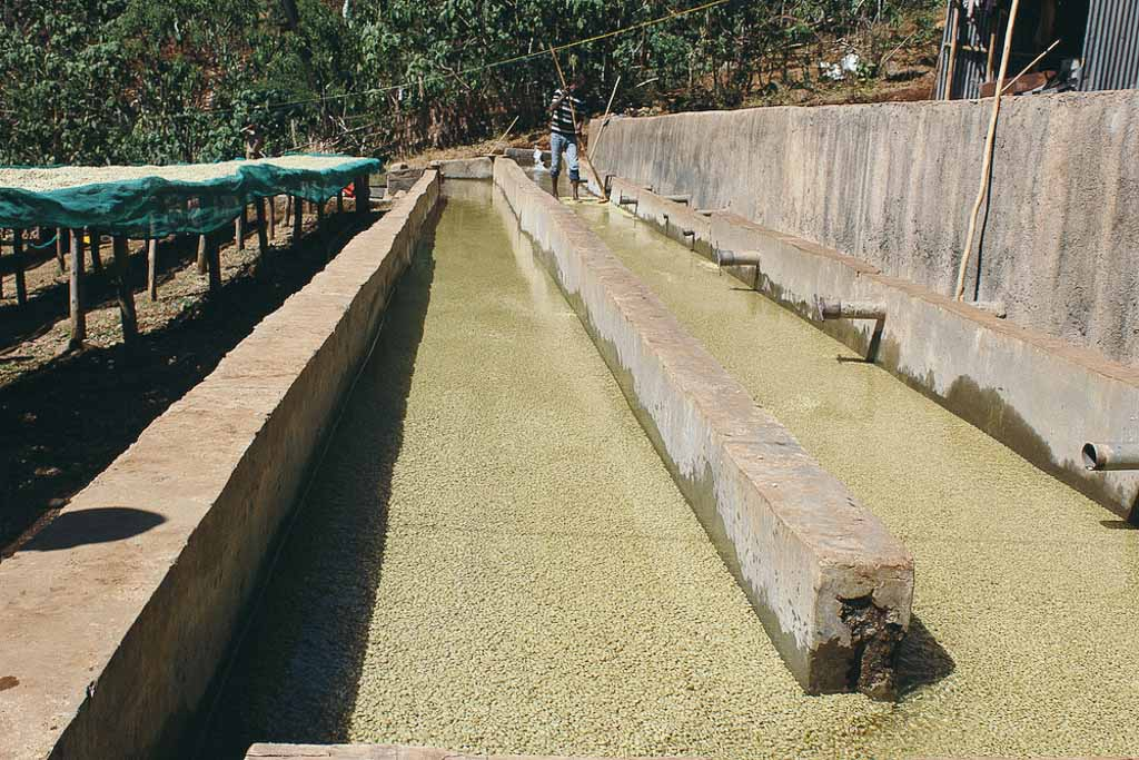 Ethiopia Coffee grading channels