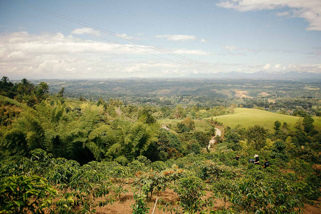Colombian coffee farm - villa esperanza