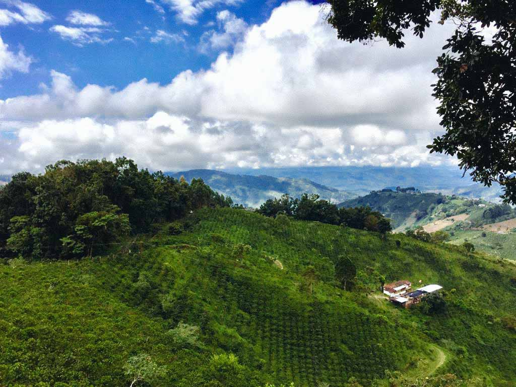 Colombia Finca Mikava coffee farm