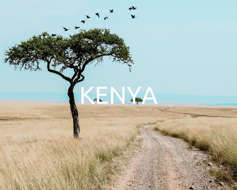 One Tree Planted Kenya