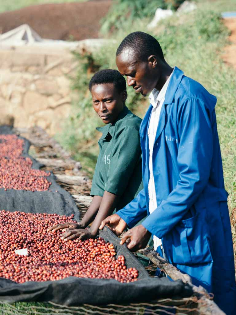 Rwanda natural processed coffee