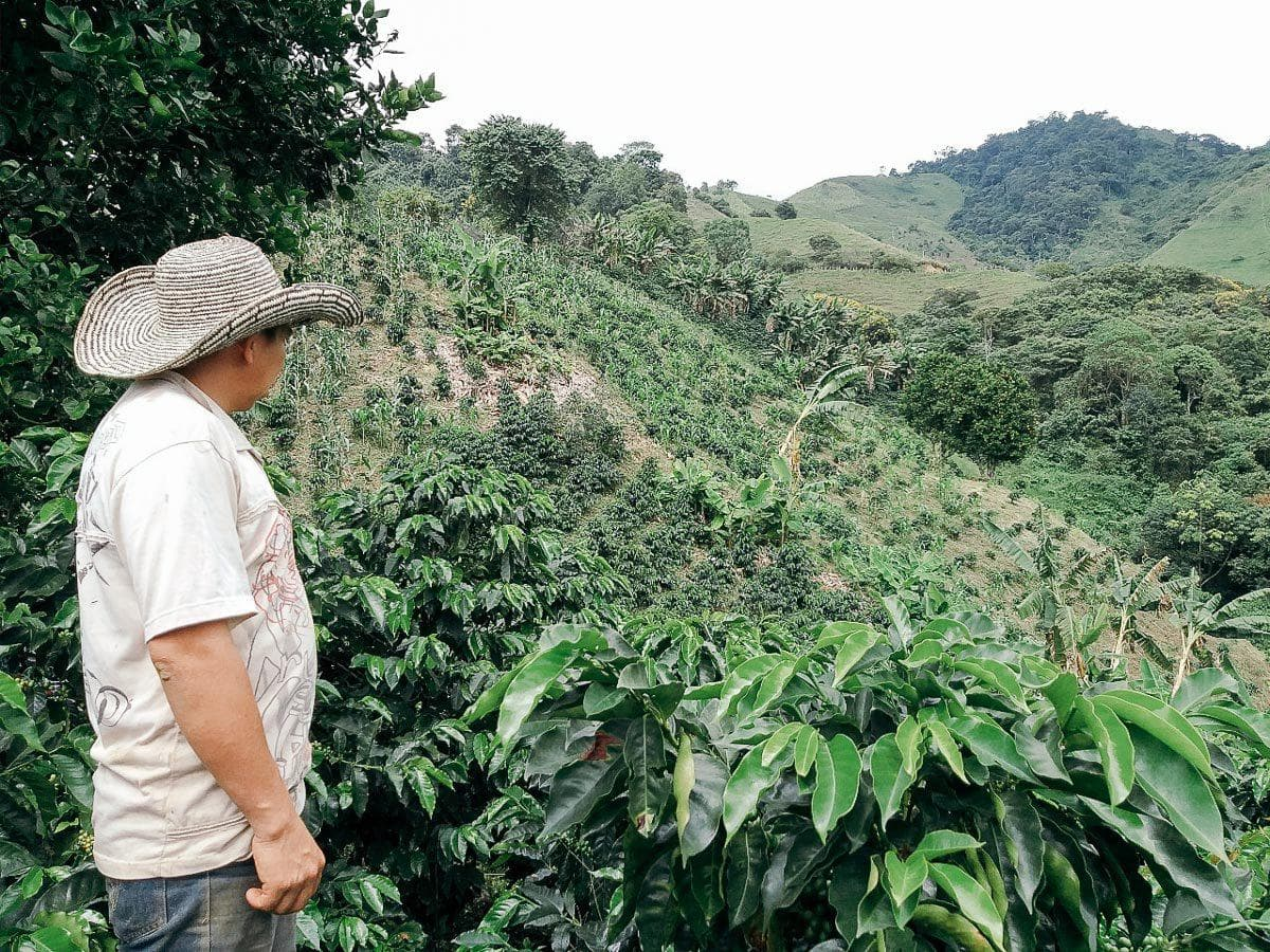 Colombia - Planadas Community Organic Coffee
