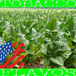 American Tobacco E-Liquid (FW) AKA USA Tobacco E-Liquid - PEC Vape Shop