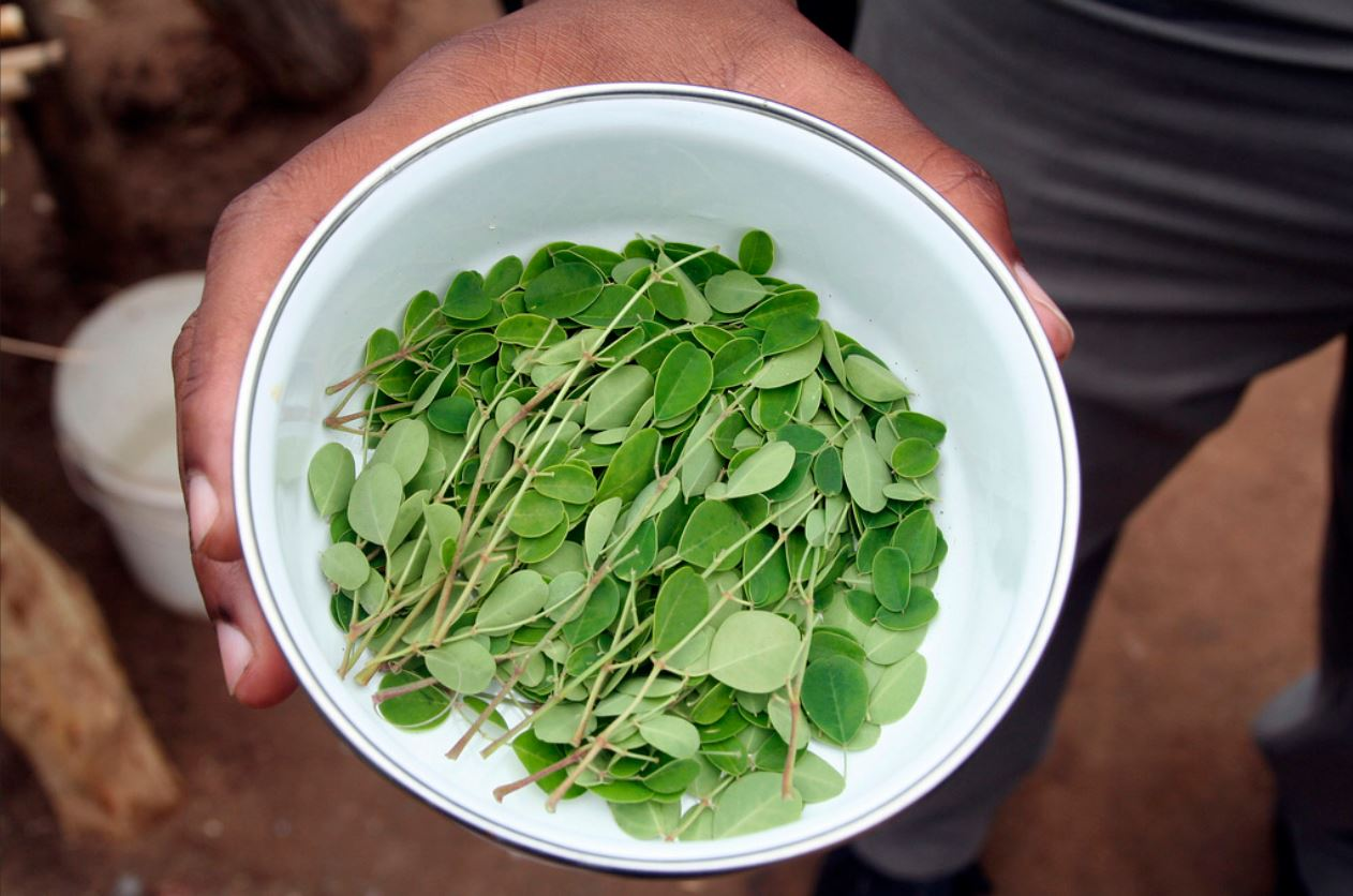 bowl of moringa