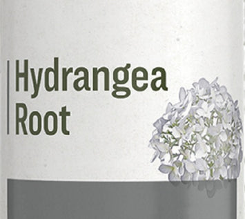 HYDRANGEA ROOT - Normal Urinary Tract Support