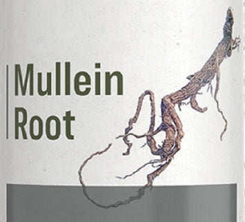 MULLEIN ROOT - Healthy Urinary Tract Support Diuretic Tincture