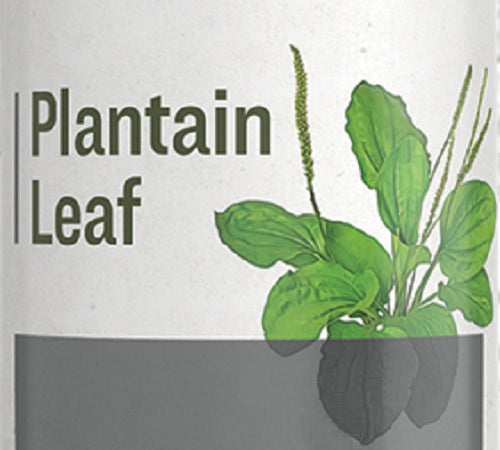 PLANTAIN LEAF - Gastrointestinal Genitourinary & Respiratory Support