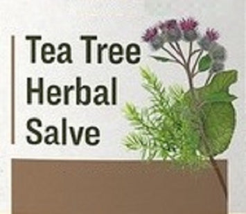 TEA TREE & BURDOCK SALVE - All Purpose Herbal Skin Care with Mullein & Lobelia