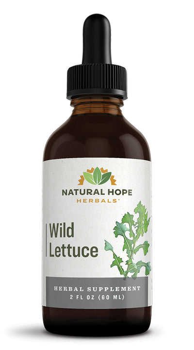 WILD LETTUCE - Natural Respiratory Support & Sleep Aid Tonic