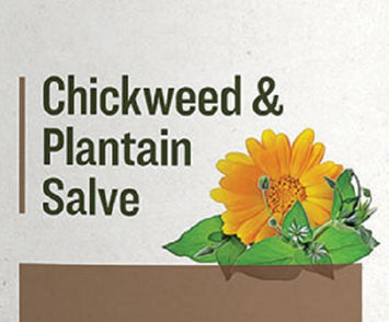 CHICKWEED & PLANTAIN SALVE - All Purpose Care for Dry Chapped Hands & Skin