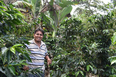 90+ Find: Celso Mayta -Cafe Golondrina (Bolivia). Geisha. 92-point Competiton Winner. NEW ARRIVAL!