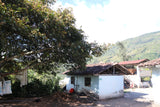 86+ Find: Marco Lasso (Colombia) Nariño Microlot Roast. NEW ARRIVAL!