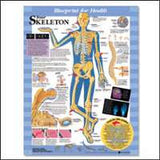 YOUR SKELETON CHART - The Science Shop