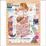 Your Digestive System Chart - The Science Shop