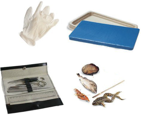 Student Dissection Kit (6 Specimens) - The Science Shop