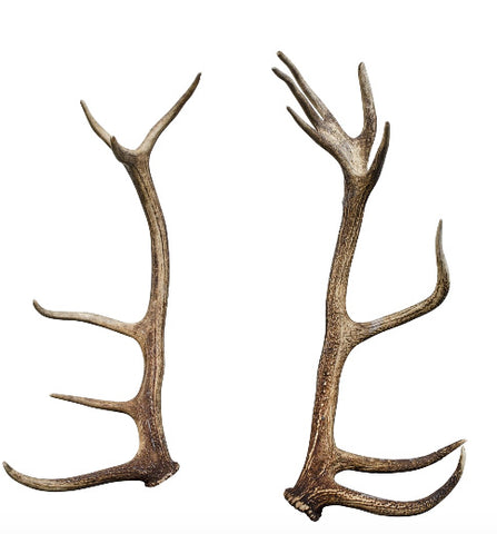 Natural Red Stag Antler