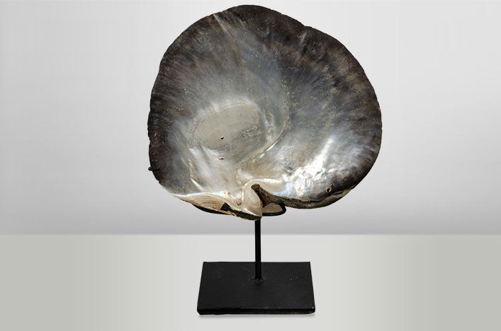 Objets D'art - Shell on Stand