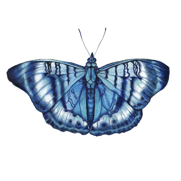 Blue Butterfly Watercolour Limited Edition Art Print - Artista Style