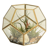 Glass Centerpiece Terrarium or Lantern for Plants or Candles - Artisanal Creations