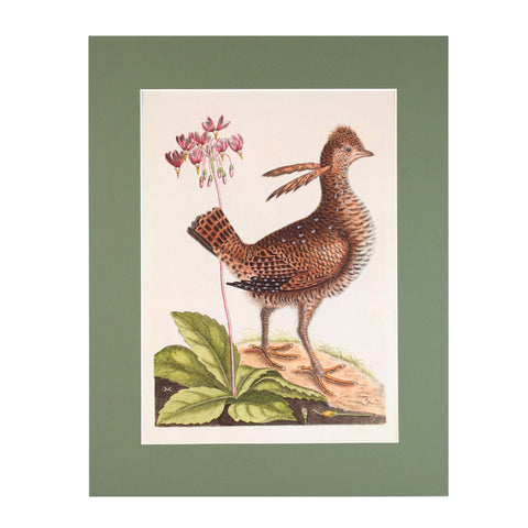 American Woodcock Print - Blue Bowl