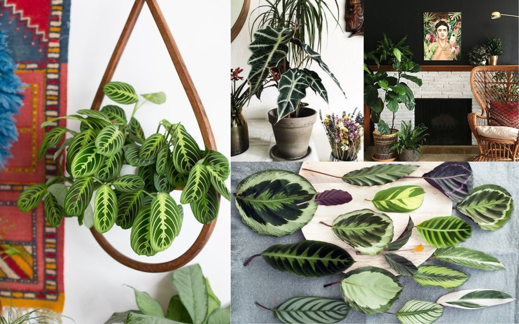 Patterned plants for home decor