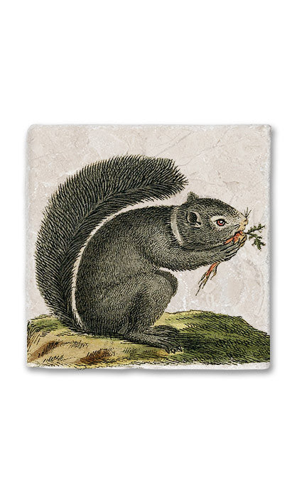Nature Squirrel Stone Magnet