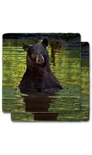 Bear In The Lake Stone Coaster Set