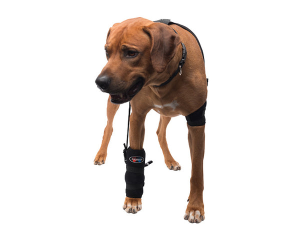 Large Carpal Pet Therapy Wrap