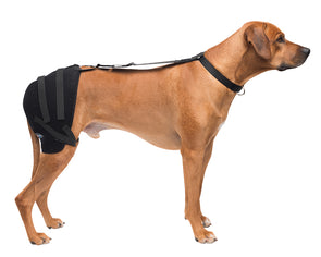 Large Hip Pet Therapy Wrap