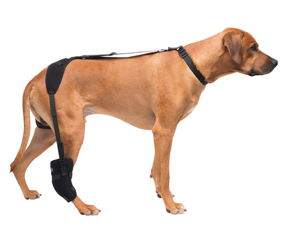 Large Tarsal Pet Therapy Wrap