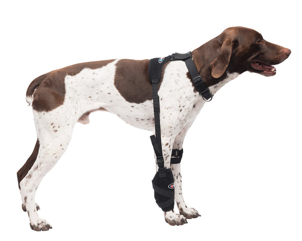 Medium Universal Pet Therapy Wrap - Carpal/Elbow