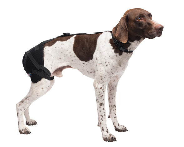 Medium Hip Pet Therapy Wrap