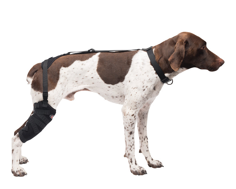Medium Tall Stifle Pet Therapy Wrap – Caldera International, Inc.