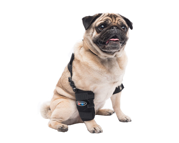 Small Universal Pet Therapy Wrap - Carpal/Elbow