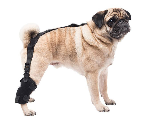 Small Universal Pet Therapy Wrap - Tarsal/Stifle