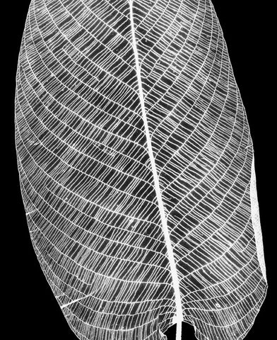 """Prayer Plant - 1990"" Silver Gelatin by Amanda Means"