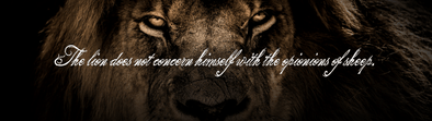 The Lion Collection | Iron Apparel